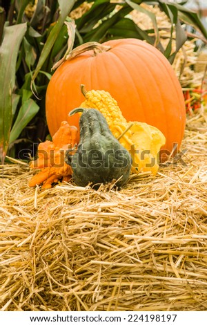 Colorful gourds and an orange pumpkin on a hay bale - stock photo