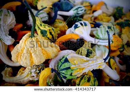 colorful gourds at a farmers market  - stock photo