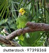 Colorful Green And Yellow Parrot Sitting On a Branch - stock photo