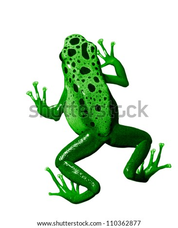 colorful green frog on white background. Isolated - stock photo