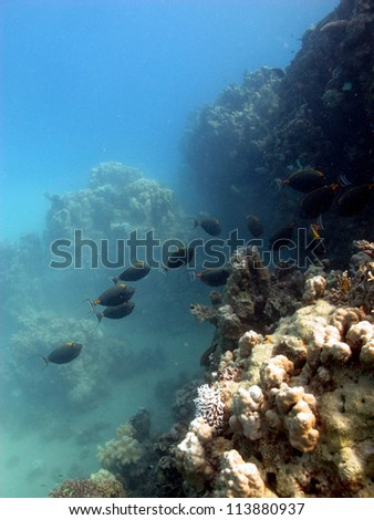 Colorful group of the fishes in shallow water near the surface - stock photo