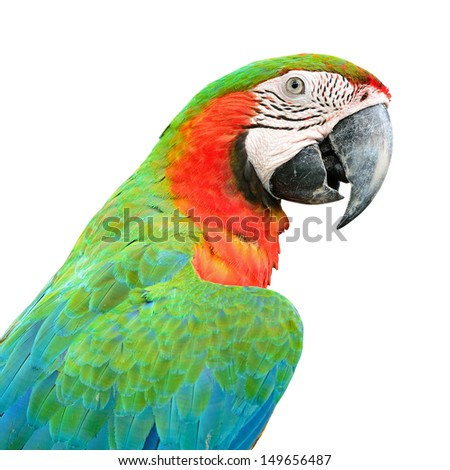 Colorful Harlequin Macaw aviary, back profile, isolated on white - stock photo