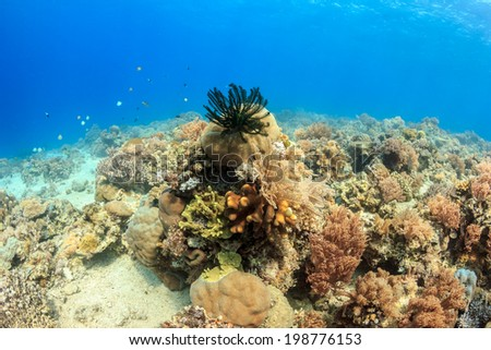 Colorful, healthy coral reef - stock photo