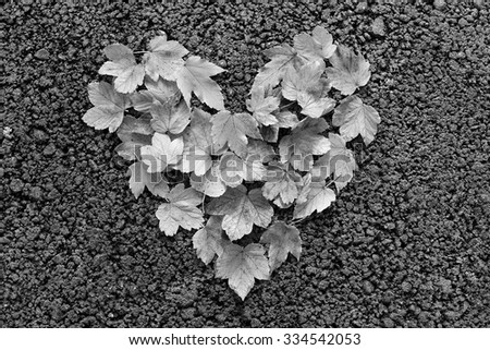 Colorful heart made of autumn leaves - stock photo