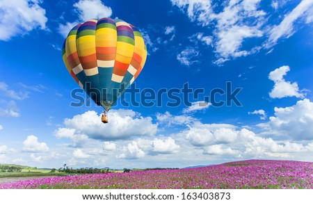 Colorful hot air balloon over pink flower fields with blue sky background - stock photo