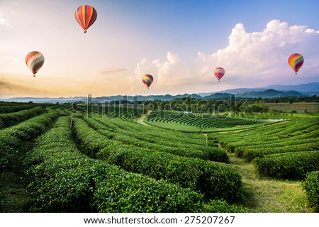 Colorful hot-air balloons flying over tea plantation landscape at sunset - stock photo