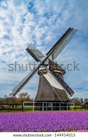 Colorful hyacinths frame working windmill in Holland - stock photo