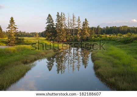 Colorful image of taiga pine trees growing on the banks of a marsh and tributary creek in Northern Maine Forest - stock photo