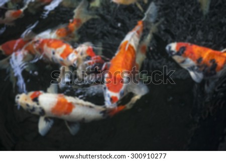 Colorful Koi fish in a pond - stock photo