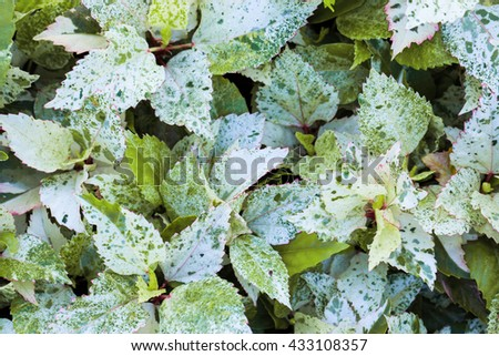 colorful leaves in nature background texture for design pattern artwork and product. - stock photo