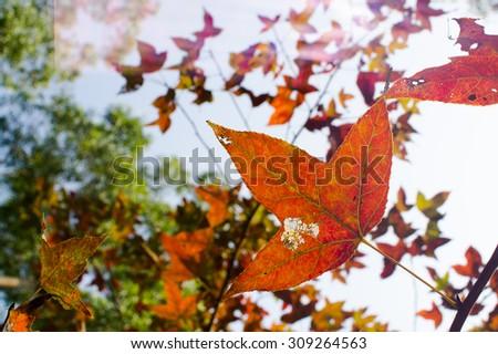 Colorful leaves, Yuen Long, Hong Kong, China - stock photo