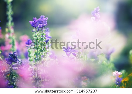colorful lilac beautiful flowers in garden flowerbed on natural green background. Fresh summer photo - stock photo
