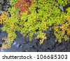 Colorful maple leaves cover the stream in autumn - stock photo