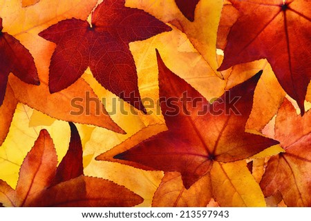 Colorful maple leaves of autumn filling the frame, glowingly illuminated in the studio - stock photo
