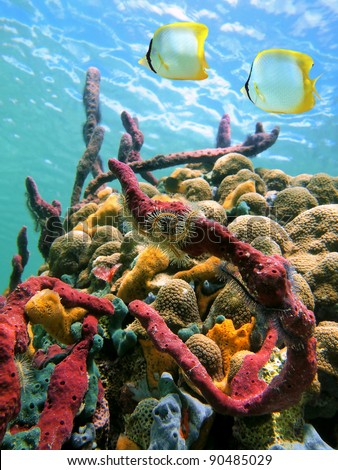 Colorful marine life and tropical fish in a coral reef under water surface of the Caribbean sea - stock photo