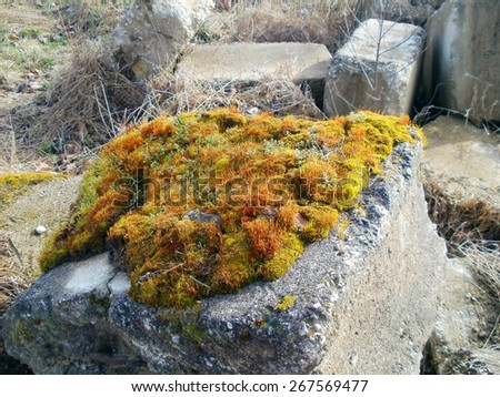 Colorful moss grows on abandoned concrete block     - stock photo