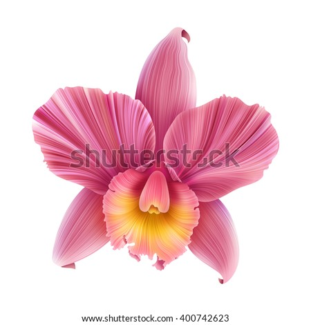Colorful Orchid Flower isolated. Beautiful tropical background - stock photo