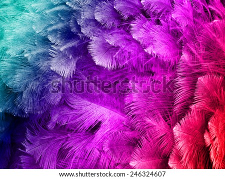colorful ostrich feather background  - stock photo