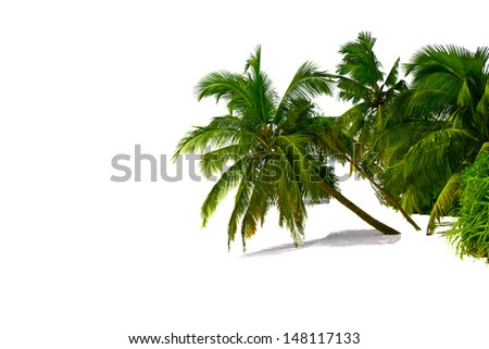 Colorful palm trees isolated over white background with shadow  - stock photo