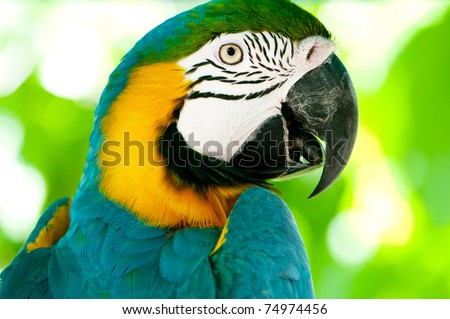 Colorful parrot bird sitting on the perch - stock photo