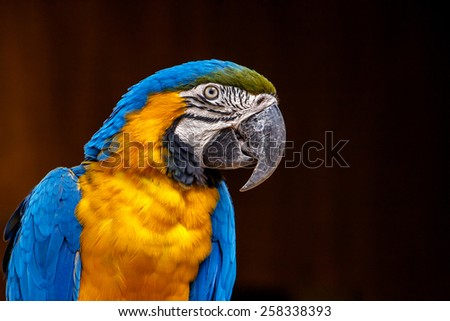 Colorful parrot close-up - stock photo