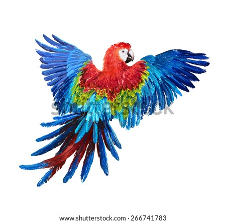 colorful parrots - stock photo