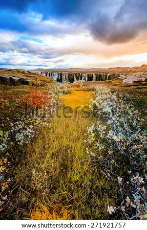 Colorful patch of grass with Sellfoss waterfall in the backdrop. Iceland - stock photo