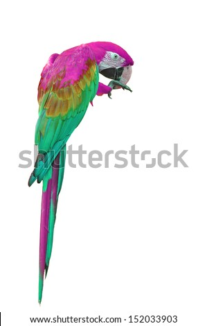Colorful pink-and-green Macaw isolated on white background  - stock photo