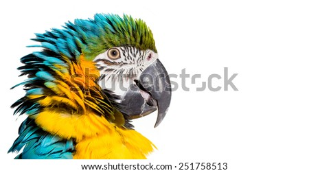 Colorful portrait of a parrot macaw against white background - stock photo
