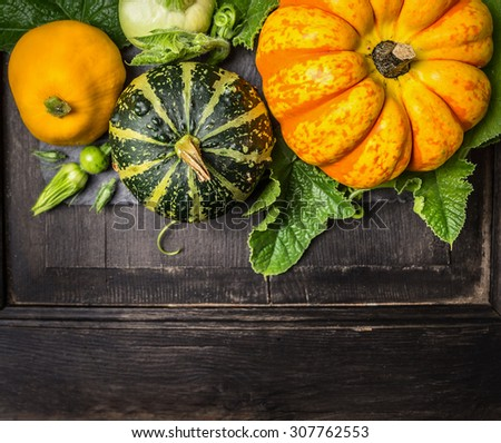 colorful pumpkin with stem and leaves on dark wooden background, top view - stock photo