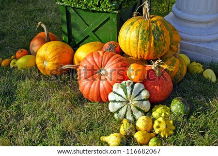 Colorful pumpkins collection - stock photo