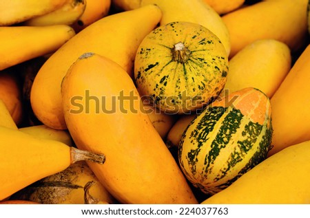 Colorful pumpkins. Halloween pumpkins. - stock photo