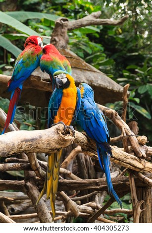 Colorful red and blue macaw perched on a branch - stock photo