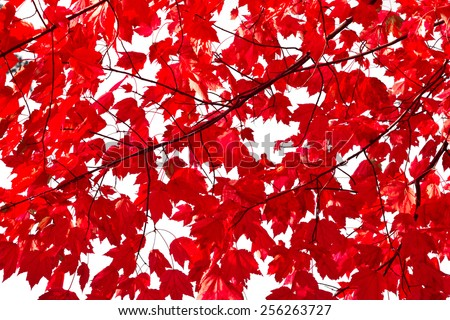 Colorful red fall leaves background texture pattern - stock photo