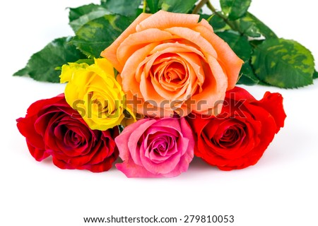 colorful roses over white background - stock photo