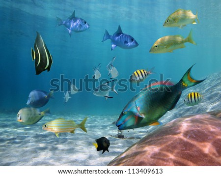Colorful school of fish with ripples of sunlight reflected on the ocean floor - stock photo