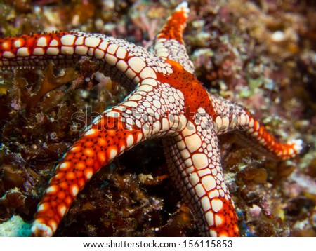 Colorful seastar on a coral reef at Bunaken Island, Indonesia - stock photo