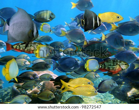 Colorful shoal of coral reef fish in the Caribbean sea - stock photo