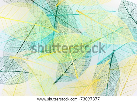 colorful Skeleton leaves ,close up for  background - stock photo