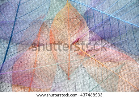 Colorful skeleton leaves on background - stock photo