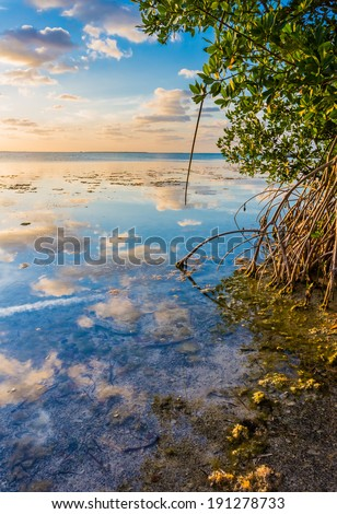 Colorful sky reflected in water of mangrove lagoon - stock photo