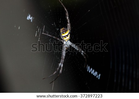 Colorful spider in high definition with extreme focus and DOF (depth of field) isolated on black background - stock photo