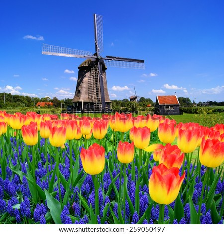 Colorful spring flowers with classic Dutch windmill, Netherlands - stock photo
