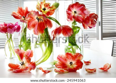 Colorful spring tulips in old milk bottles on table - stock photo