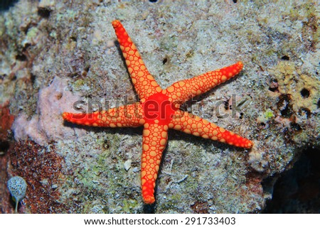 Colorful starfish in the tropical coral reef  - stock photo