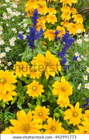 Colorful summer flowers in the perennial border; Cottage garden; Lush blooming yellow flowers; Mix of summer flowers - stock photo
