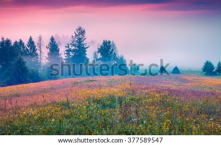 Colorful summer morning in the foggy mountain valley. Fresh grass on a meadow glowing first sunlight at sunrise. Borzhava range,  Transcarpathians, Ukraine, Europe. Instagram toning. - stock photo