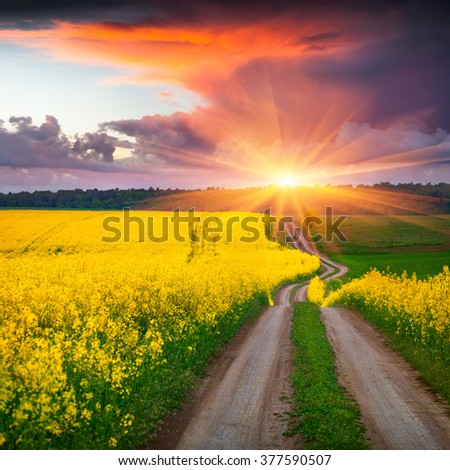 Colorful summer scene in the countryside. Sunrise on the field of blooming colza. Amazing landscape for advertisement using. - stock photo