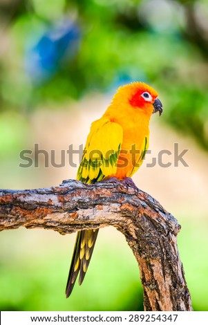 Colorful sun conure perched on a tree branch - stock photo
