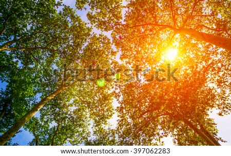 Colorful sun rays shining through the trees in a park - stock photo